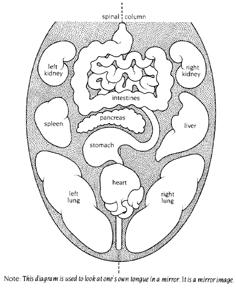 Tongue and Corresponding Organ Locations